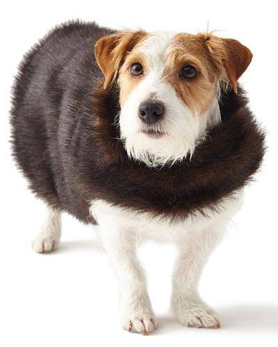 Faux-Fur Small Dog Coat