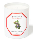 Carriere Freres Fig Tree Candle, 6.5 oz. /