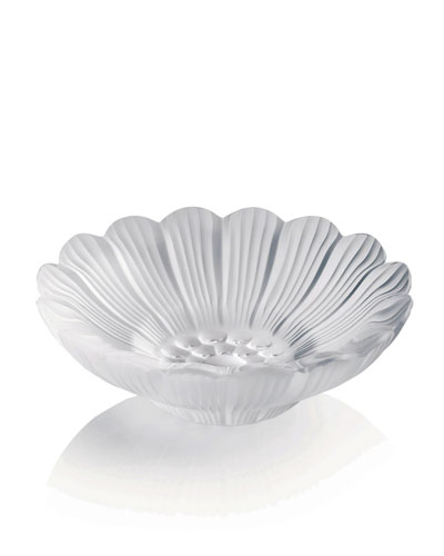 Paquerettes Dish