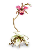 Jay Strongwater Orchid in Cachepot & Orchid Objet