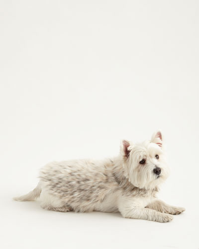 Small Faux-Arctic Leopard Dog Coat