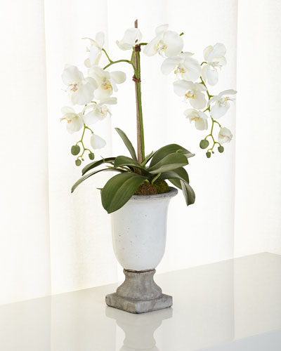 Orchids in Ceramic Urn
