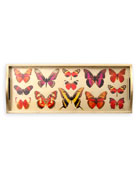 Deyrolle Butterfly Tray