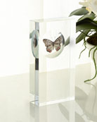 John-Richard Collection Butterfly Encased in Crystal