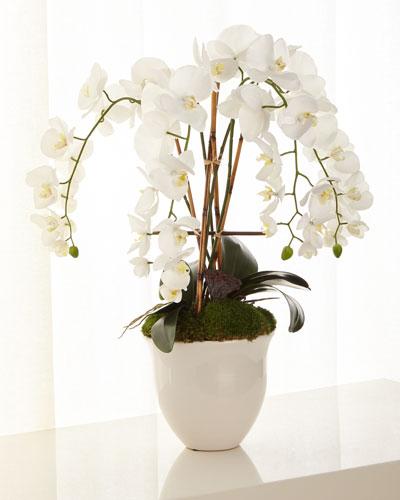 Abstract Orchids Arrangement