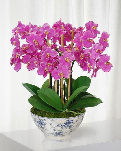 Orchid in Rose Trellis Bowl