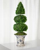 Boxwood Topiary in Rose Trellis Vase