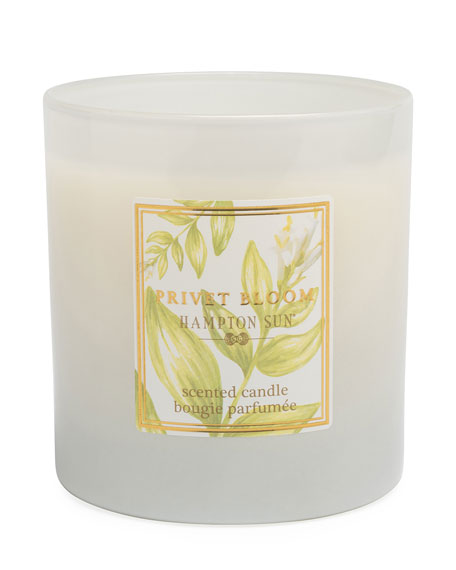 Hampton Sun 7.5 oz. Privet Bloom Scented Candle