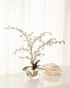 John-Richard Collection Marquis Orchid Arrangement
