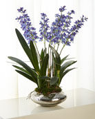 John-Richard Collection Periwinkle Dendrobiums Arrangement