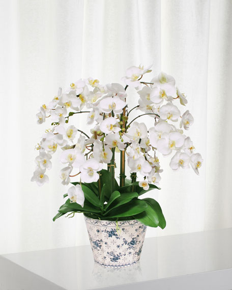 Winward Orchid in Fleur Oval Container