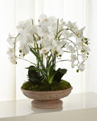 John-Richard Collection Irresistible Phalaenopsis Arrangement