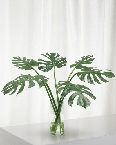 Monstera in Cylinder Vase