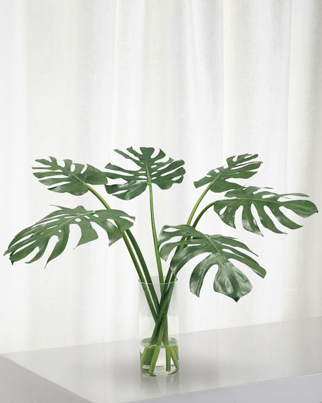 Winward Monstera in Cylinder Vase