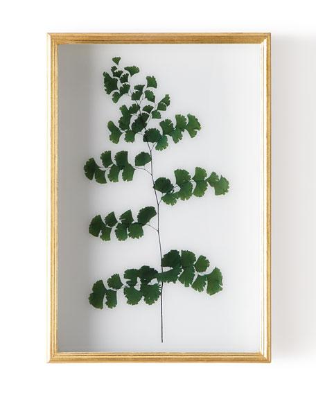 """John-Richard Collection """"Fern III"""" Shadow Box Display"""