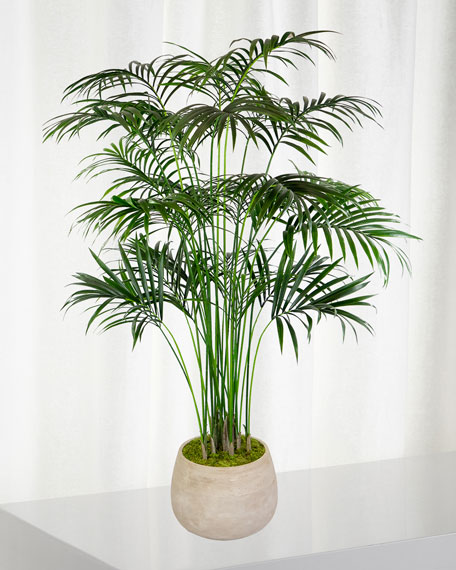 Winward Kentia Large Palm in Planter