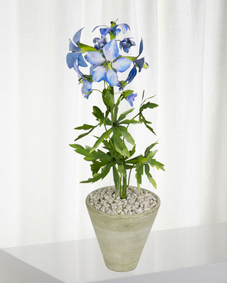 Charlotte Moss for Tommy Mitchell Delphinium July Birth Flower in White Terracotta Pot